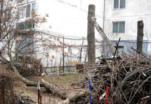 Taiere copaci Timisoara