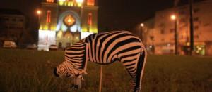 Piata Balcescu protest zebra