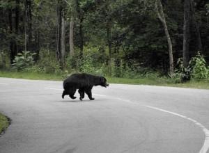 urs pe autostrada