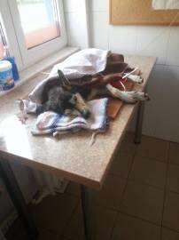 Caine lovit de masina si abandonat (3) Foto Animal Care Team
