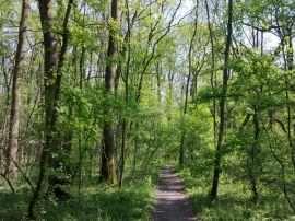 Padurea Verde Timisoara