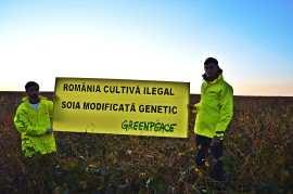 Greenpeace_soia