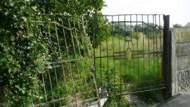 cimitirul-saracilor-timisoara-2